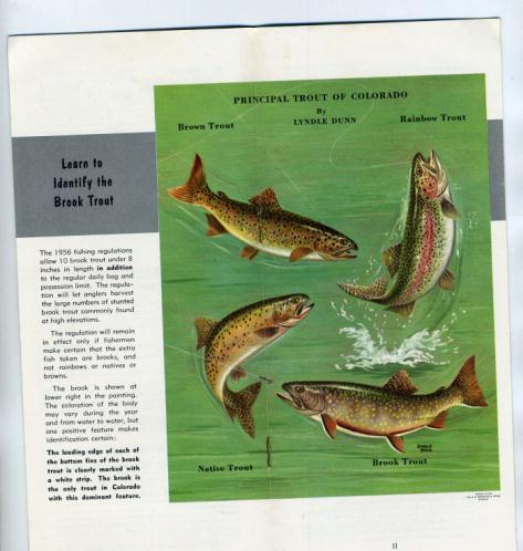 1968 nonresident colorado fishing licenseebay for Colorado fishing laws